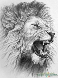 Tippi Hendren WOW Pinterest Pet Lion Lions And Animal - 1971 family lived real lion named neil