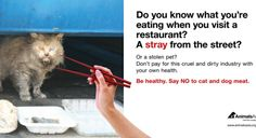 """""""Say No to Cat and Dog Meat"""" ad comes alive"""