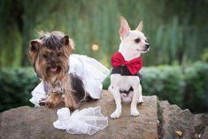 Ο πρώτος μήνας μετά το γάμο Advice, Couples, Dogs, Animals, Animales, Animaux, Doggies, Couple, Animal