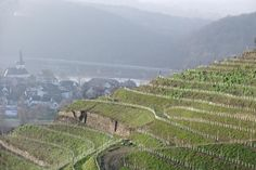 FASTENWANDERN in Deutschland -  Siebengebirge am Rhein