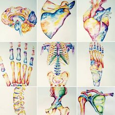 Watercolour Anatomy art Source by Art Lessons, Art Painting, Watercolor, Medical Art, Drawings, Science Art, Anatomy Drawing, Painting, Art