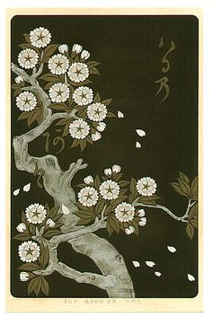 Korin Ogata 1658-1716 - Cherry - Rimpa School Series