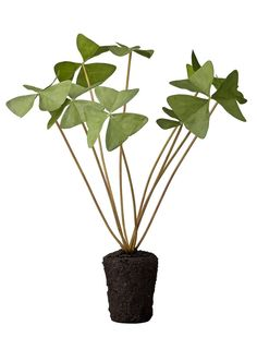 A delicate and vibrant faux Oxalis plant by Lene Bjerre Design. This lovely artificial oxalis plant with it's unusual triangular leaves is hand crafted. Artificial Topiary, Artificial Flower Arrangements, Artificial Plants, Floral Arrangements, Fake Flowers, Silk Flowers, Topiary Trees, Fake Plants, House Plants