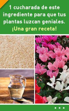 1 cucharada de este ingrediente para que tus plantas luzcan geniales. ¡Una gran receta! Compost, Diy And Crafts, Glass Vase, Alcoholic Drinks, Tips, Nature, Plants, Gardening, Gardens