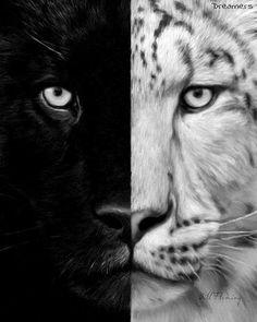 #puma or #tiger