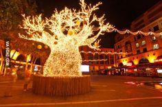 African Christmas Tree (A Baobab Tree )