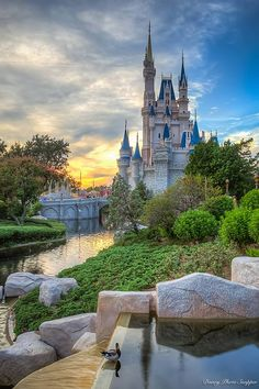 Wow! Beautiful picture of Cinderella Castle from Disney Photo Snapper! Thats one lucky duck! Do you stop to take pictures of the Disney ducks and bunnies? They are like celebrities!