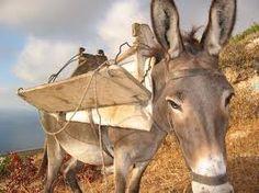 Karpathian donkey Karpathos, Donkey, Greece, Horses, Foods, Island, Animals, Image, Food Food