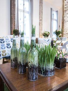 Folie végétale : le vert pousse partout, même dans les bouteilles !