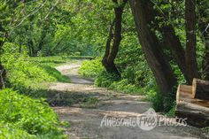 Free Stock Photo for Commercial Use - Path in the Woods