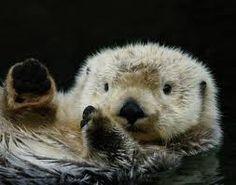 Resultado de imagem para biologia marinha lontras