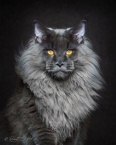 Robert Sijka est un spécialiste de la photographie animalière et un grand passionné des chats en