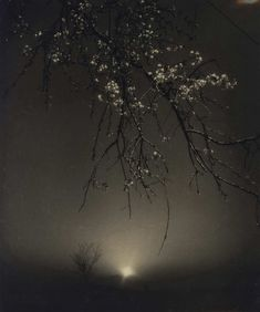 Mitsuhiro Shinoda's nocturne Nocturne, Josef Sudek, Japanese Photography, Water Reflections, Japan Photo, Dark Places, Vintage Silver, Monochrome, Gallery