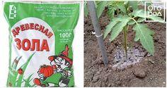 Îngrășăminte tradiționale pentru fertilizarea roșiilor - cele mai bune sfaturi - Fasingur Snack Recipes, Snacks, Chips, Garden, Plants, Tapas Food, Appetizer Recipes, Appetizers, Potato Chip