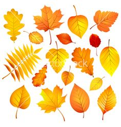 Autumn leaves vector by -Baks- on VectorStock®