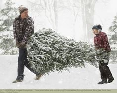 Caucasian father and son carrying Christmas tree through the snow, West New York, New Jersey, United States