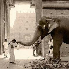 iNDIA & Elephants ♥♥♥