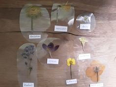 What's on Our Montessori Shelves - Flowers from Living With My Little Love