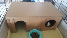 Give your Guinea Pigs a life of luxury with an epic DIY Guinea Pig Cage. Check out 23 amazing cage designs and choose the one which suits you best. Diy Guinea Pig Toys, Diy Guinea Pig Cage, Guinea Pig Hutch, Guinea Pig House, Pet Guinea Pigs, Guinea Pig Care, Guinie Pig, Pig Shelter, Guinea Pig Accessories