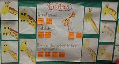 Mrs Jump's class: Zoo unit Day 1 Giraffes