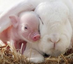 pig rabbit friends