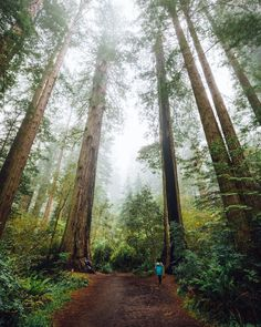 ***Walking on a trail in Redwood National and State Parks by Tom Parker (@tomparkr) on Instagram cr.c.