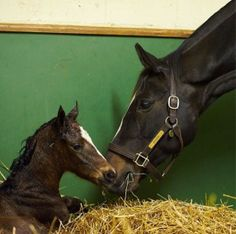 Congratulations to Zenyatta, who had a filly by War Front at 12:03 AM this morning!  Easter 4/20/2014
