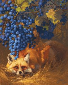 Secrets of the Vineyard by Greg Beecham.  Grapes and fox.