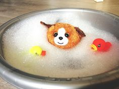 Relaxing  #beaniebabies #beanieballz #beanieboos #tyinc #bath #bathduck #beaniebath by skopje420