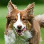 6 SIMPLE TASKS THAT'LL HELP YOUR PET LIVE LONGER How to Keep Your Pets Safe