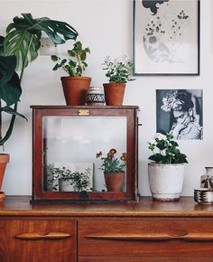 "✧☽Arden Trading Co.☾✧ on Instagram: ""In love with this scene, teleport me to this magical place  @lobsterandswan #interiors #interiordesign #plants #frida #fridakahlo #bohostyle #bohohome #bohodecor #finditstyleit #thatsdarling #sodomino #jungalowstyle"""