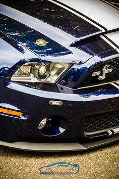 She's Got Her Eye On You, A Stunning Super Snake