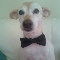 Beanz is a contestant for True Chews Dog of the Week! #TrueChews