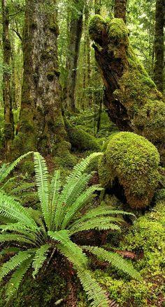 Kepler track NZ #newzealandwalkingtours #newzealandwalkingtrails http://newzealandwalkingtours.com
