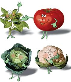 Friend and Foe Companion Planting for: Beans, Corn, Onions, Cukes, Peppers, Cabbage, Lettuce, Radishes, Carrots & Tomatoes