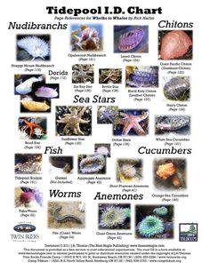 oregon tide pool identification - Google Search