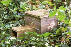 How to make a hedgehog house - Projects: Wildlife gardening - gardenersworld.com