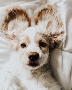 All dogs are cute and adorable, but we took some of the most popular choices out there to develop this list of the 20 cutest dog breeds. Puppies breeds The 20 Cutest Dog Pictures Cute Funny Animals, Cute Baby Animals, Animals And Pets, Cute Dogs Breeds, Cute Dogs And Puppies, Doggies, Cutest Dogs, Puppies Tips, Cutest Puppy
