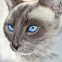 This looks like my old cat, Kitty/Lilac