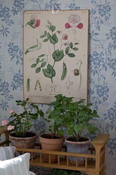 byggnadsvård skolplansch blommig tapet sandbergs vera Kitchen Wallpaper, Room Wallpaper, Oh My Home, Botanical Decor, School Posters, Scandinavian Interior, Home Decor Styles, Decoration, Garden Art