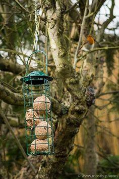 Fuji X-T2 - Wild Birds: Fujifilm X System / SLR Talk Forum: Digital Photography Review