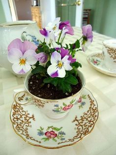 great idea for mothers day gift kids love making these, gardening, I love the finished tea cup