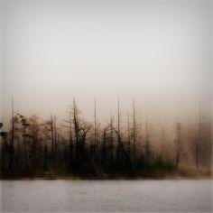 fog is so romantic.