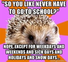 "[Picture: Background - twelve sections like a pie, alternating pink and orange. Foreground - adorable hedgehog. Top text: """"So y..."