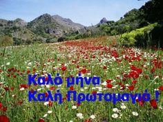 Beautiful Pink Roses, May, Greek, Greece