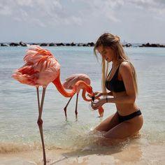 Flamingos..