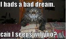 Funny cat Quotes - Bing images