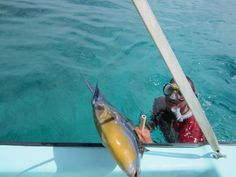 Mark with a triggerfish!