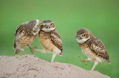 cute owls photos | Cute owl caressing his friend cute birds