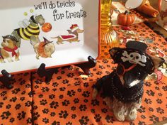 Dogs do tricks for treats ! Halloween 2016, Scary Halloween, Goblin, Tablescapes, Tea Party, Texas, Dining, Food, Table Scapes